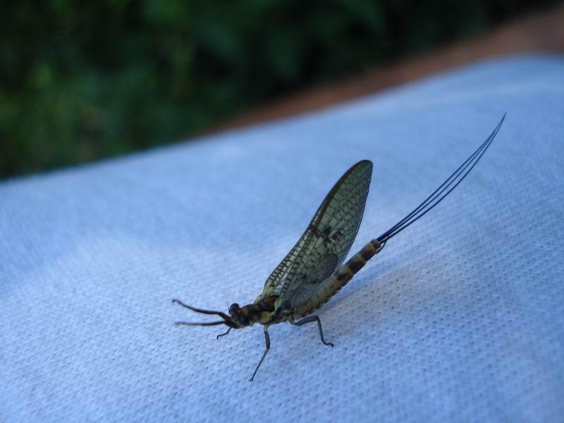 Insecte dans maison images - Pourquoi des fourmis dans la maison ...