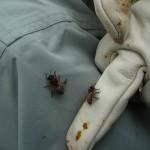 La découverte de l'apiculture